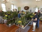 plant-sale-2014-OTH